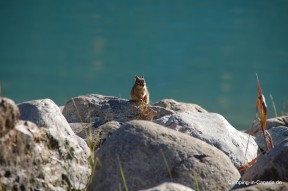 Squirrel am Lake Louise